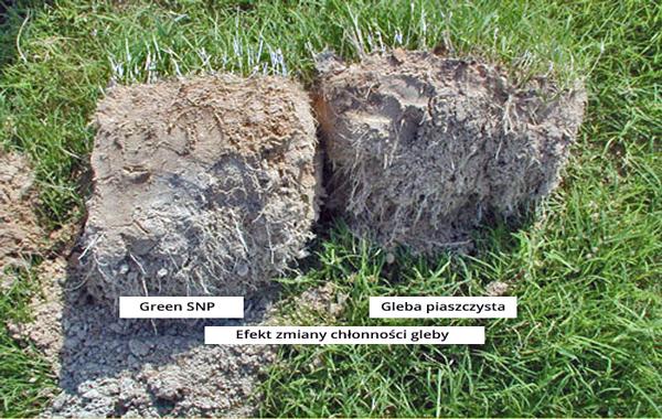 Zmiana chłonności wody wpływa na rozwój systemu korzeniowego w luźnych glebach.