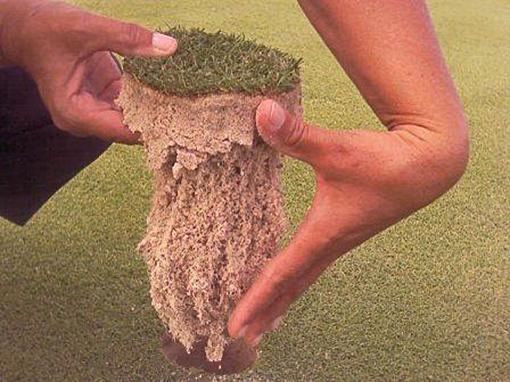 Krzemianowy, ulepszony hydrożel, polepszający retencję wody. Dla gleb piaszczystych i luźnych.