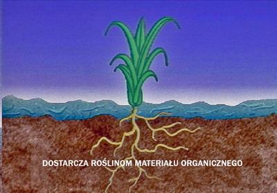 Hydrosiew - mulcz dostarcza roślinom materiał organiczny.