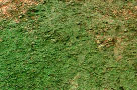 Hydrosiew z aplikacją 600 kg/ha - mulcz celulozowy